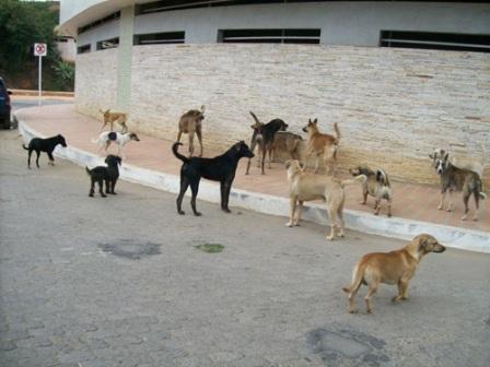 animais-rua-russia